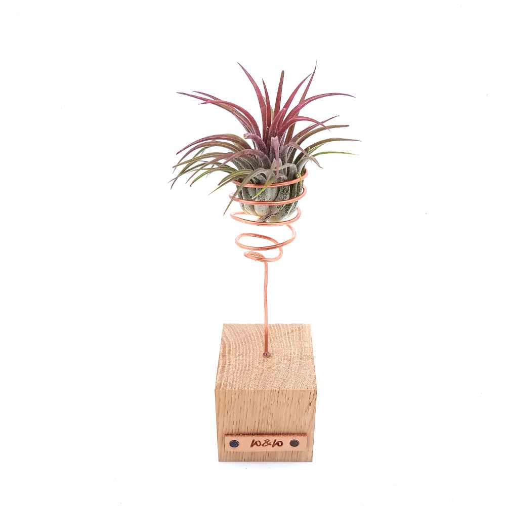 airplant rood standaard hout