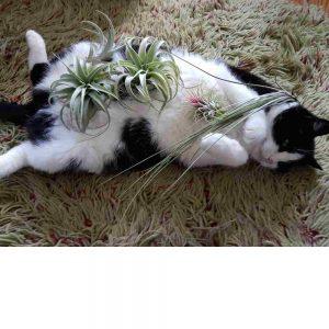 luchtplanten planten dier vriendelijk