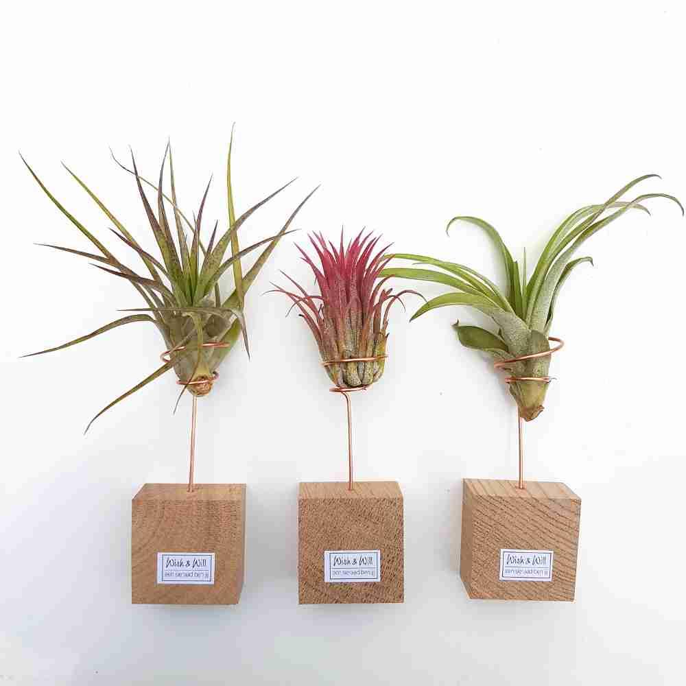 luchtplanten mix standaard hout