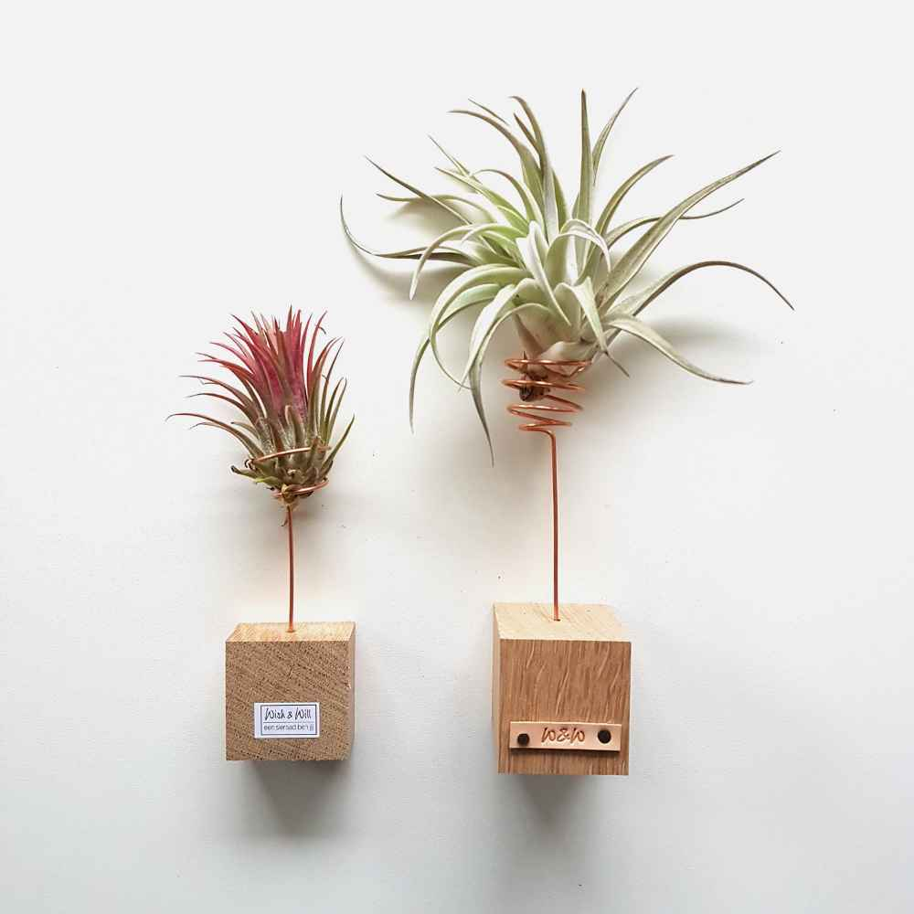 luchtplanten set standaard