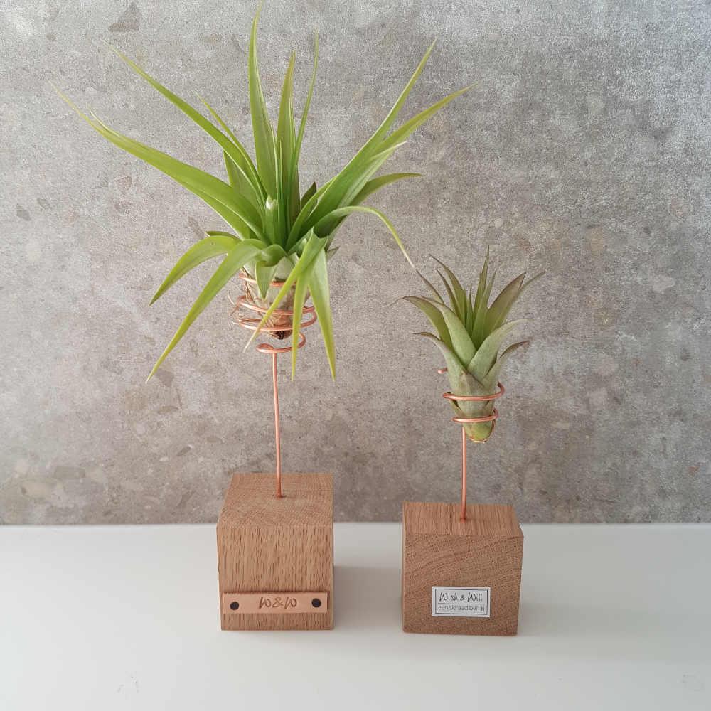 luchtplantje standaard airplants cadeau